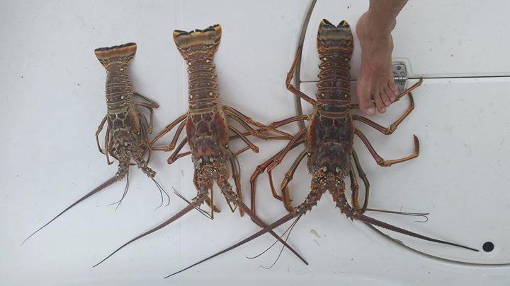 czyli drinki z rumem...codziennie nurkowanie... swieże ryby i lapanie Lobsterów :)