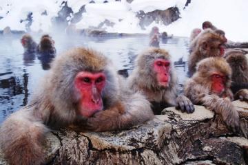 Japonia, Nagano – czyli zimowe szaleństwo w krainie orientu