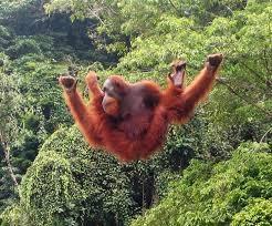 Indonezja, Sumatra - relaks w cieniu tropikalnych lasów