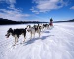 Spitsbergen - tydzień na krańcu Północy! - Dzień 3
