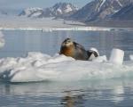 Spitsbergen - Brama Arktyki - Dzień 4
