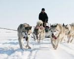 Norwegia - safari na skuterach śnieżnych - Dzień 1