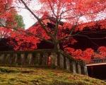 Japonia - Kraj Kwitnącej Wiśni - Dzień 3